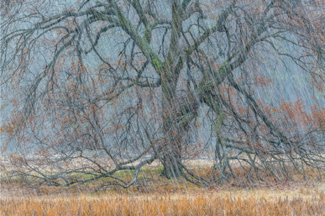 Autumn Snowstorm by William Neill