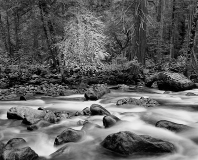 Merced River and Forest by John Sexton
