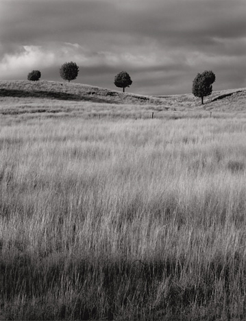 Little Trees, Coonabarabran, Australia by Rob Pike