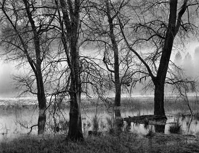 Trees, Valley Fog, Dusk by John Sexton