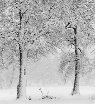 Two Trees In Snow by Anne Larsen